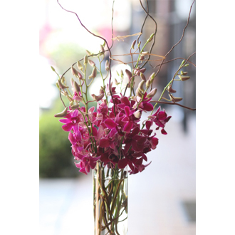 Orchid Blitz