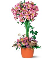 Alstroemeria Topiary