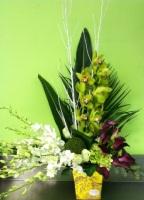 Cymbidium & Dendrobium