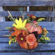 Pumpkin-o'-Plenty