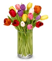 Multi color Tulips in vase