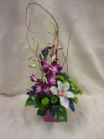 Long Lasting Orchid Arrangement