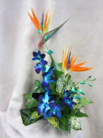 Tropical Birds & Orchids