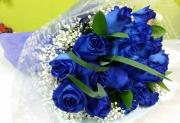 3 Dozen Blue Roses