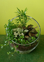 Tropical Garden Terrarium