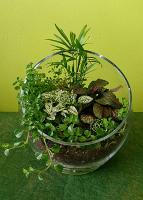 Tropical Garden Terrarium