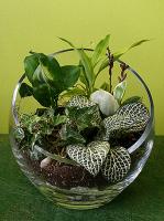 Tropical Greens Terrarium