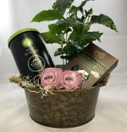 Coffee and Chocolate Gift Set with Coffee Plant