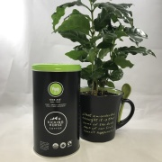 Coffee and Coffee Plant Gift Set