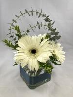 3 Gerber Daisy Centerpiece - Standard