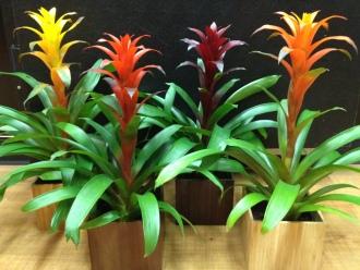 Assorted Bromeliads