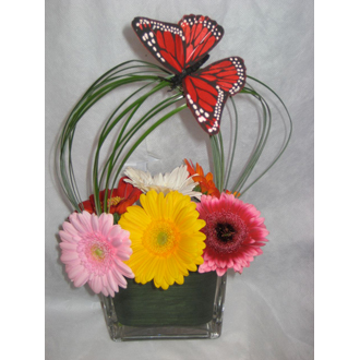 BROADWAY FLORISTS BUTTERFLY GERBERA CUBE ARRANGEMENT