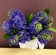 Fragrant Hyacinths
