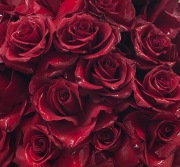 Red Rose Dozen Special