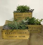 Succulent Wood Garden