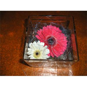 TWO GERBERA IN A CUBE