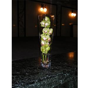 CYMBIDIUM ORCHID STEM