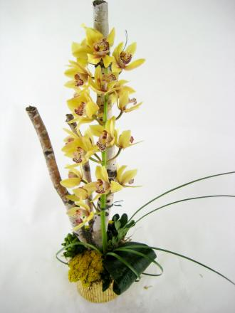 Orchid on Branch