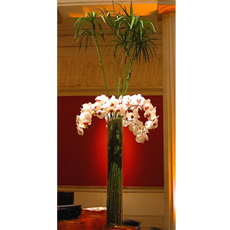 Broadway Florists Orchids