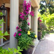 Fuchsia Bright Summer Urn