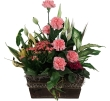 PINKPLANTER03