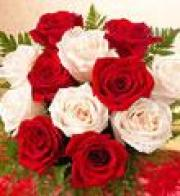 1 Dozen Long Stem Red and White Roses Cello Wrapped