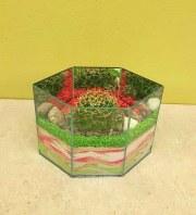Cactus Garden 1C
