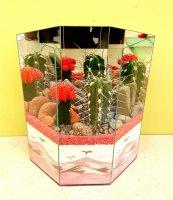 Cactus Garden 3A