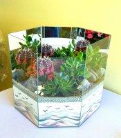 Cactus Garden 7A