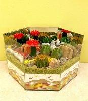 Cactus Garden 8A