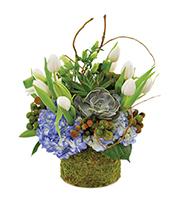 Succulent Spring