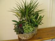 CARISMA FLORISTS® Florist Designed Blooming & Green Plants CF-31