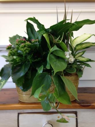 Carisma Florists® Planters19