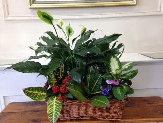 Carisma Florists® Planters20