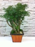 Plante Moderne LS21