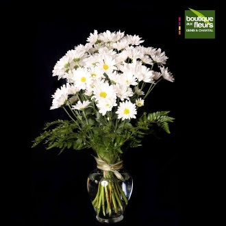Marguerites blanches en vase