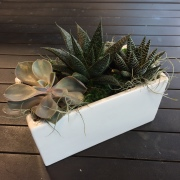 Succulent Triple Planter