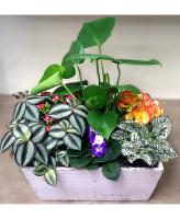 Flowering Dish Garden