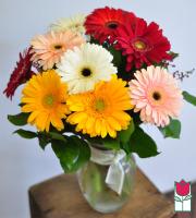beretania florist daisy bouquet