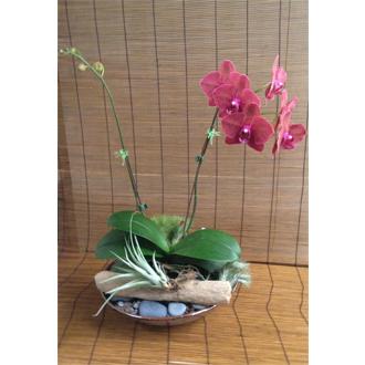 Phaelanopsis Ceramic Garden