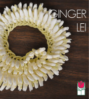 Micronesian Ginger Lei Honolulu Delivery