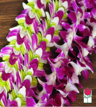 Set Orchid & Mia Lei