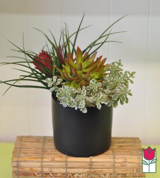 Succulent Garden Cylinder