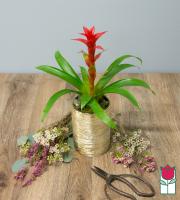 The Beretania Florist Mini Bromeliad [Color Varies]