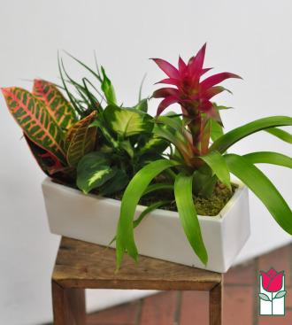 The BF Mini Garden in Ceramic