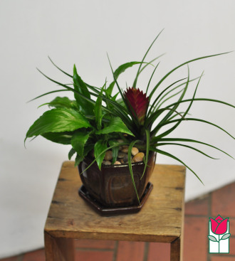 beretania florist mini peace lily garden