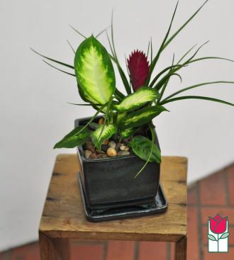 beretania florist mini spath garden