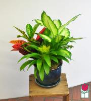 Beretania's Meduim Blooming Planter