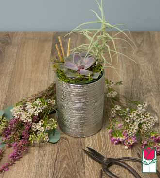 Beretania\'s Mini Succulent Garden [succulent variety varies]