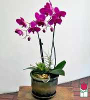 The BF Double Orchid Planter